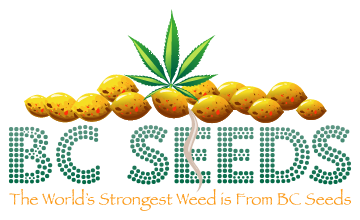 Worlds Strongest Weed